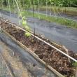 パッションフルーツの高畦栽培で土づくり(1)