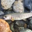 利根川の上流の奈良俣湖でカヌーで奥地に入り釣りをしました