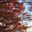 八幡山の紅葉--終わりかけでした