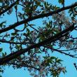 葉っぱの5分咲き