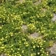 初夏に近づくベランダや周囲の花