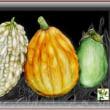 3種類の野菜