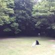 山の公園 ~白鳥さんは毎日お水で涼しそうね~
