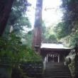 八幡宮来宮神社のご神木