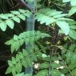 筍の木の芽和え