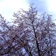 鹿角にも花の季節到来