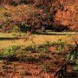 小石川植物園のシラサギ