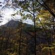 午後は山梨百・高畑山-倉岳山