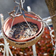冬の庭・・・バードフィーダー吊るしました」