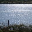 光る池・芝川第一調節池