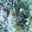 2月16日(土)四国!【樫西】!透明度20mオーバーの海!水中生物も盛りだくさん!
