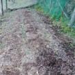 玉ねぎに肥料