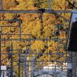 静岡鉄道は「ちびまる子ラッピング電車」と清水山の紅葉??・・(2018年10月)
