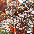 梅の便り - 神田明神