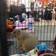 シティパークでペットショー (針鼠、ハムスターとか……)
