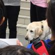 盲導犬PR。のこと