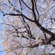 3月30日<桜坂>
