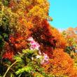 借景として観る隣の森の紅葉