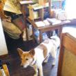 沖縄犬のいる喫茶店。犬OKらしい、ただし。。。