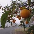 秋の気配が・・・  コスモス畑より