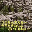アニマルコミュニケーション4