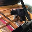 ピアノの中身を見てみたかったんだ 黒猫ジジィの冒険