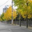 黄葉とカープ