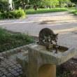 猫です!あのハンサムさんは元気で生きていますが、やせています!家に連れて帰りたい思いも!