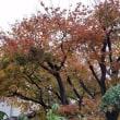 秋 深まる
