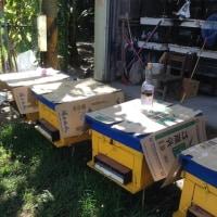 清境農場で売られている蜂蜜
