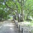 ランニング…聖蹟桜ヶ丘まで往復