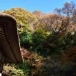 2017/12 鎌倉散策 3.明月院