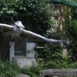 青屋根が好き 6月17日のサーナ