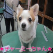 トリミング犬ご紹介 名前入り