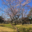各務原市民公園周辺「桜便り第1号」