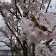 桜の時とWin10