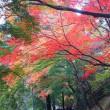 紅葉の尾関山公園