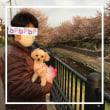 野川散歩とブログお休みのお知らせ