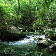 京都「Ruri溪谷」的散步,Grand Ping.