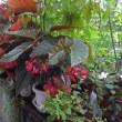 夏の庭(その1)~おすすめの花
