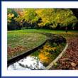 水路の黄葉
