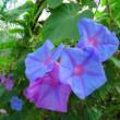 花壇と畑の花