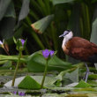 ● 掛川花鳥園にて アフリカレンカク