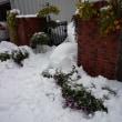 ミノチルの庭 11月8日大雪のあと