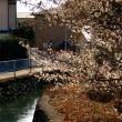 大渡橋を渡って総社町から前橋のまちを眺めてきました。おまけはわが家のかわいい守り神…