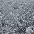 大雪です!
