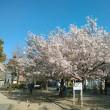 大阪-東京-大阪の桜