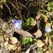 第149回いずみの国の自然館クラブ観察会~谷山池周辺~ 2