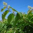 花⑫・・・里山・耕地の草花・・・タンポポ~スミレ