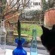 泥棒リス!冬眠はどうした!ネコのイライラがつのる裏庭での略奪行為!